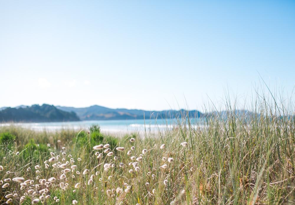 Blanccoco_Photographe_NewZealand_Landscapes-15