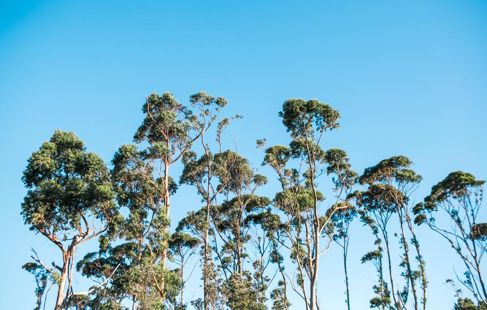 Blanccoco_Photographe_NewZealand_Landscapes-18
