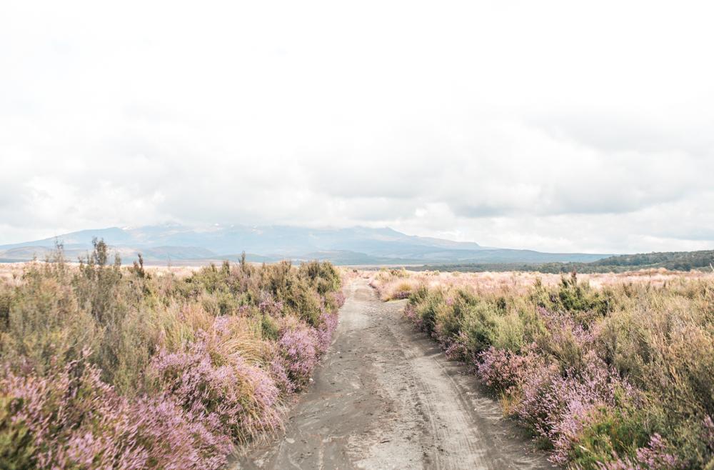 Blanccoco_Photographe_NewZealand_Landscapes-42