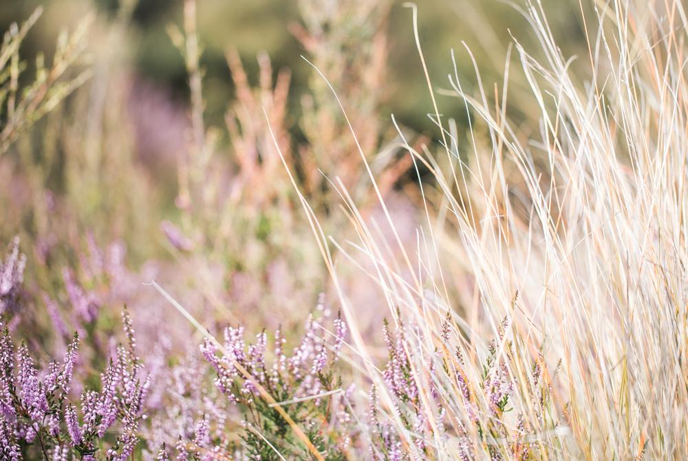 Blanccoco_Photographe_NewZealand_Landscapes-46
