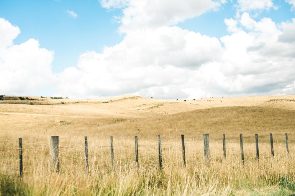 Blanccoco_Photographe_NewZealand_Landscapes-52