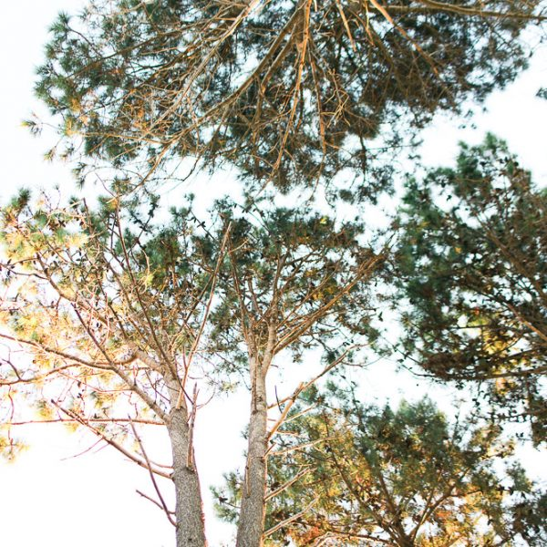 Blanccoco_Photographe_Wedding_Beach_NewZeland_Matarangi_AnnaCampbell-138