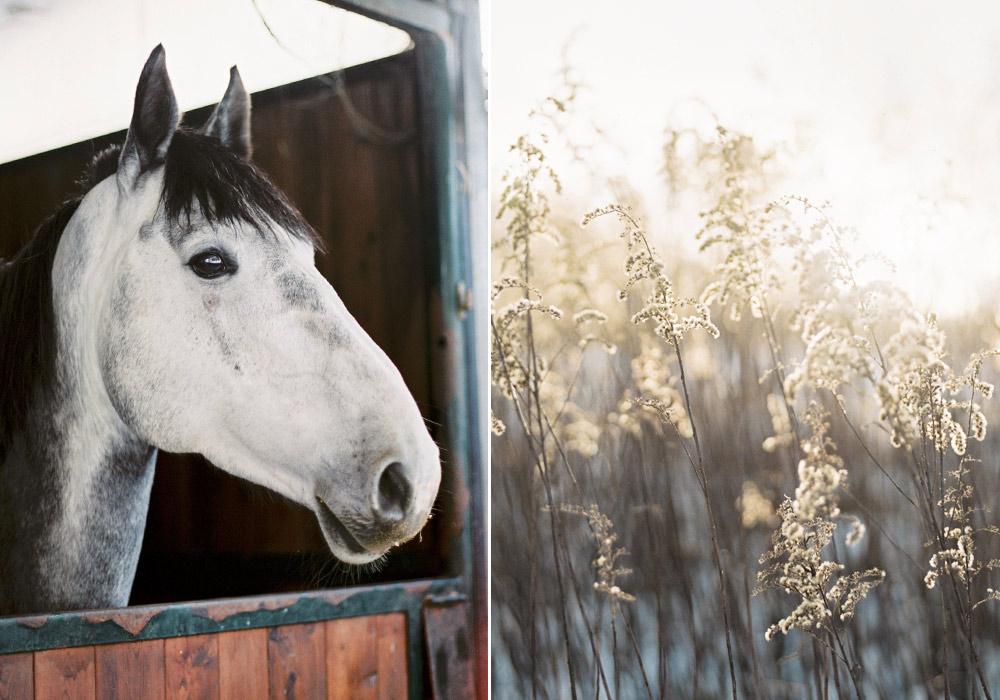 Blanccoco_Photographe_portrait_cheval_HauteSavoie-Duo6